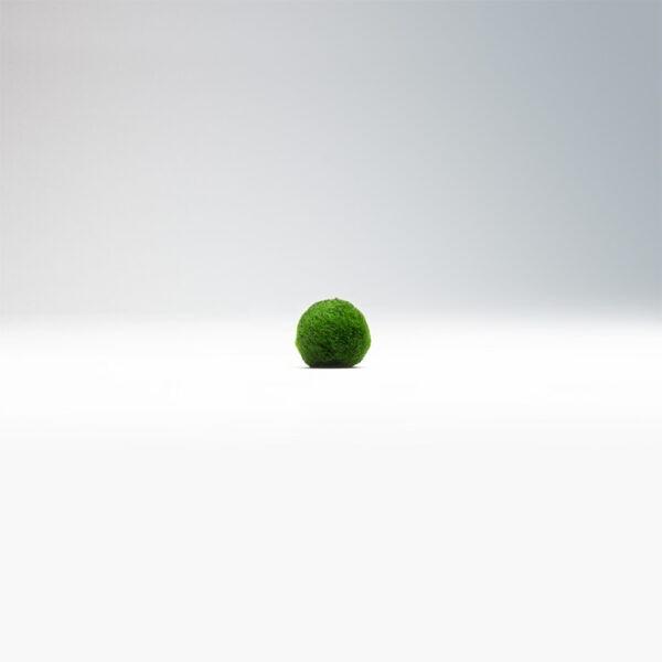 riasogule malá